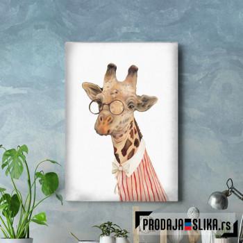 Žirafa sa naočarima