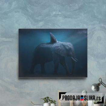 Fantastic Sea Elephant