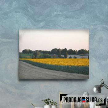 Cvetna Vojvodina