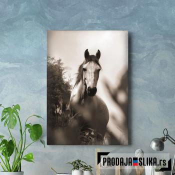 Konj crno belo